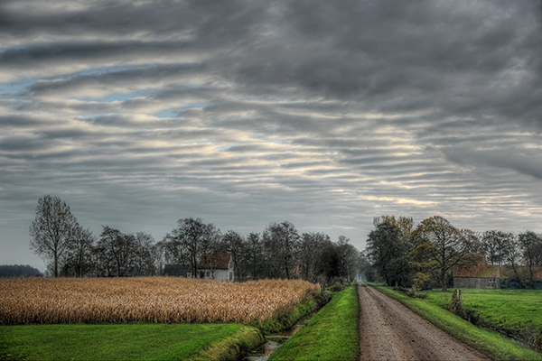 Frisian landscape