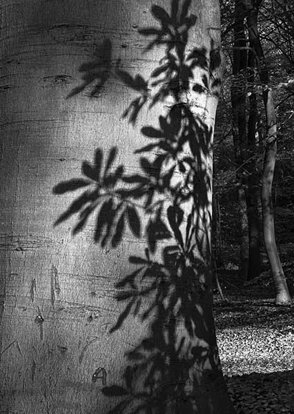 Shadow on tree