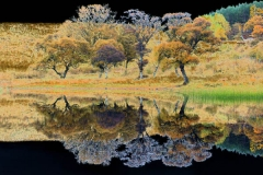 Trees in a mirror