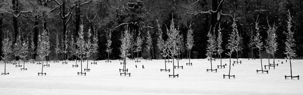 Sneeuwboompjes